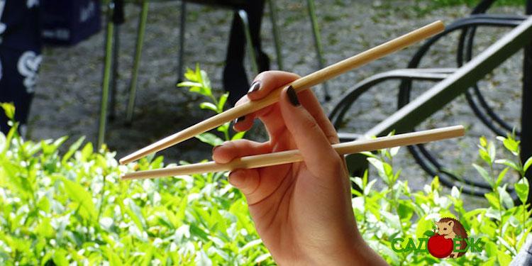 Как использовать бамбуковые палочки для суши в огороде?
