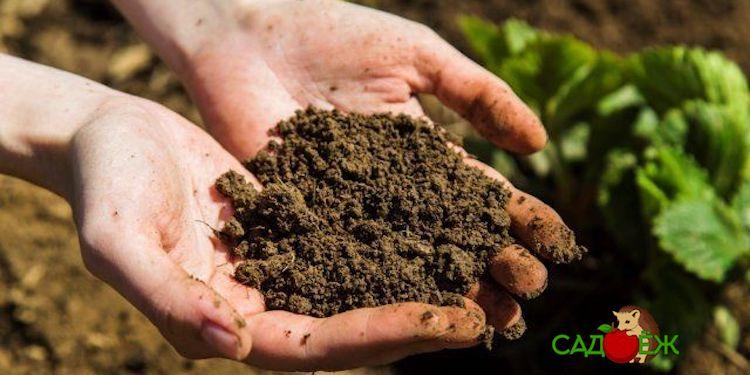 Как определить какая почва на участке?