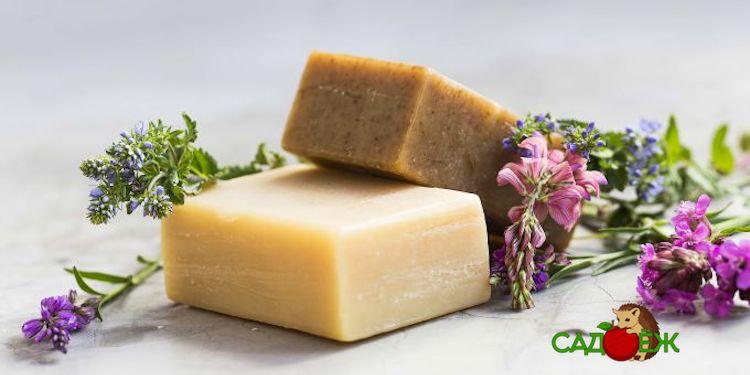 Полезное применение хозяйственного мыла в саду и огороде