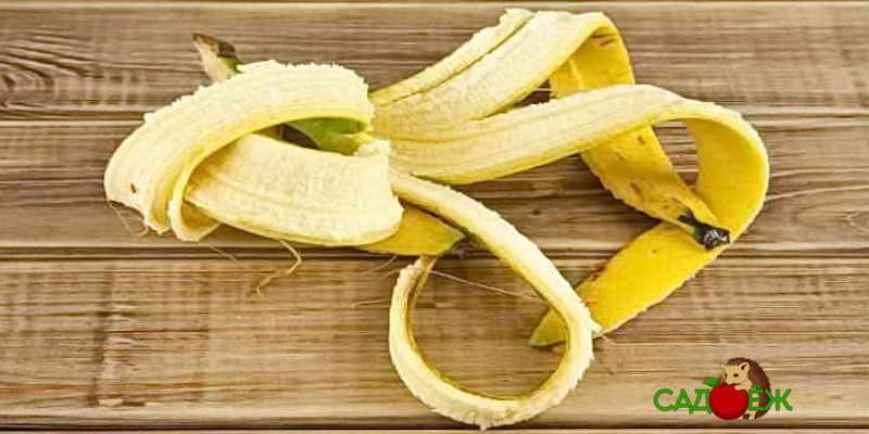 Применение банановой кожуры для огорода