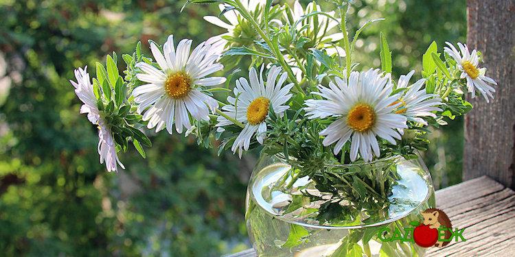 Что сделать, чтобы цветы дольше стояли в воде?