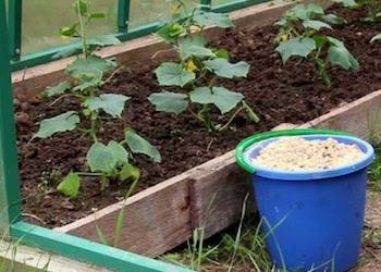 Вред опилок для почвы и огорода
