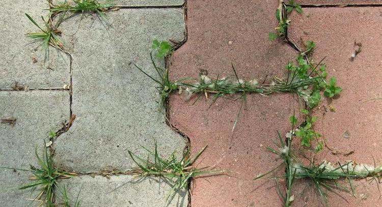 Как избавиться от сорняков между плиточек