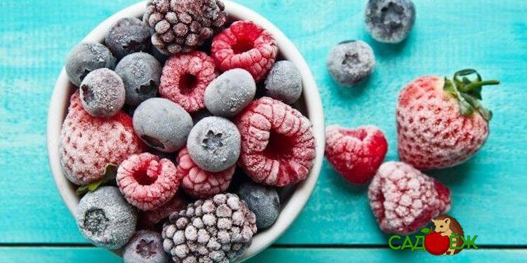 Как правильно заморозить ягоды на зиму в морозилке?