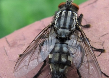 Как избавиться от мух в дачном туалете?