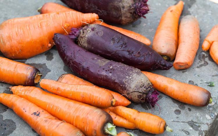 Перед хранением обязательно отрезаем ботву у моркови и свеклы