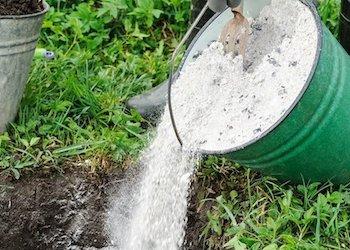 Легкий способ определить кислотность почвы с помощью смородины