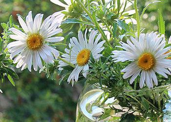 Что сделать, чтобы цветы дольше стояли?
