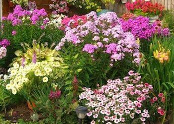 Неприхотливые цветы многолетники для дачной клумбы?