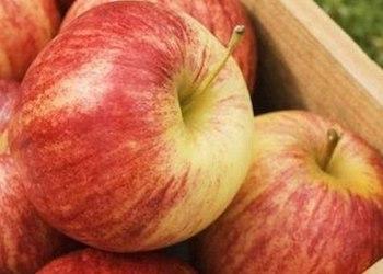 Как правильно хранить яблоки на зиму в домашних условиях