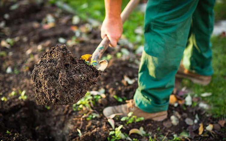 Как подготовить грядку под посадку озимого чеснока