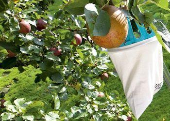 Как усовершенствовать плодосъемник для фруктов и ягод?