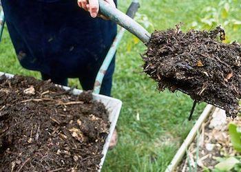 В чем польза и вред навоза для огорода?