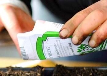Как подготовить семена к посадке на рассаду?
