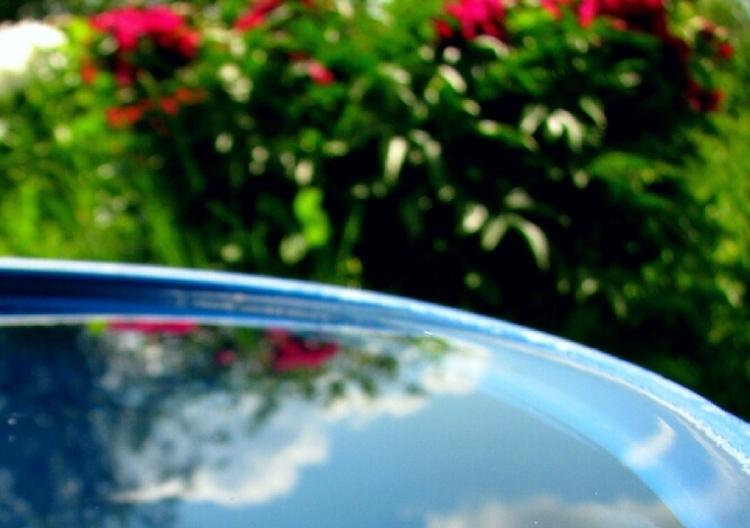 Рябина для дезинфекции воды в бочке