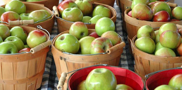 Подготовка яблок к зимнему хранению