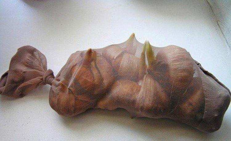 Хранение луковиц гладиолусов на подоконнике