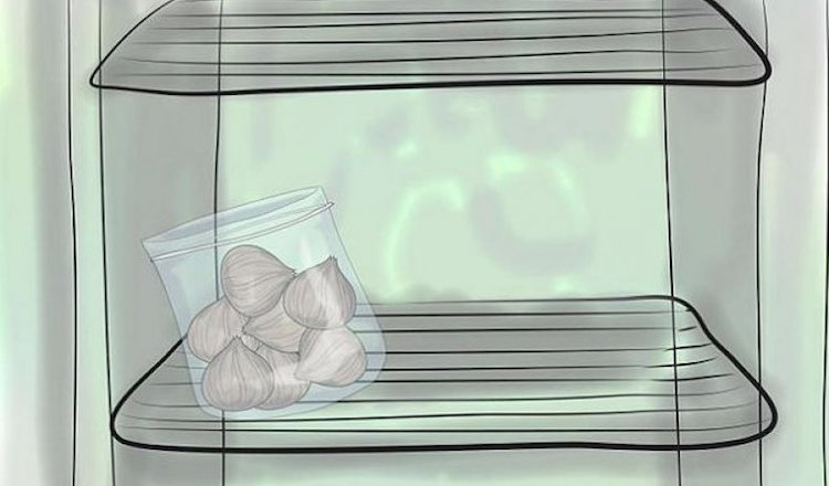 Хранение луковиц гладиолусов в холодильнике