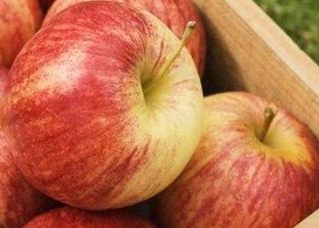 Как правильно хранить яблоки в домашних условиях?