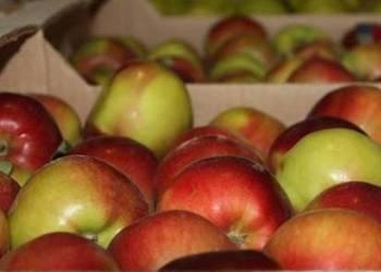 Как сохранить свежие яблоки на зиму в погребе?