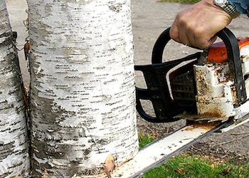 Как заставить соседа спилить дерево около забора?
