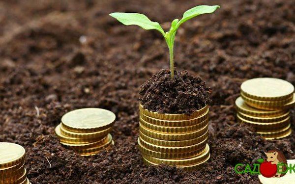 Земельный налог для пенсионеров: льготы и порядок уплаты
