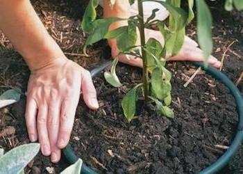 Как использовать старое дырявое ведро в саду и огороде?