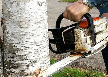 Как заставить соседа спилить дерево, затеняюшее участок?