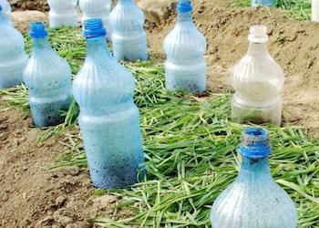 Полезное применение старых пластиковых бутылок в огороде