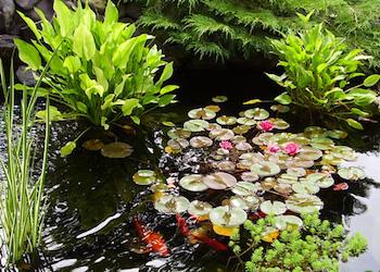 Лучшие растения для дачного пруда