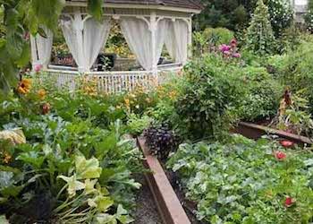 Какие растения запрещено выращивать на даче?