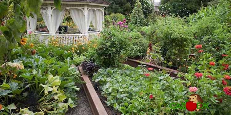 Список запрещенных к культивированию растений на дачном участке