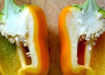 Как вырастить перец из семян овоща, купленного в магазине?