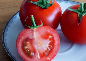 Почему у томатов появляются белые прожилки?