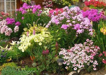 Неприхотливые цветы многолетники для дачи