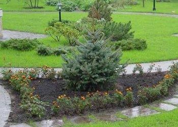Можно ли посадить новогоднюю ель в огород?