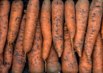 Морковь замерзла при хранении: что делать?