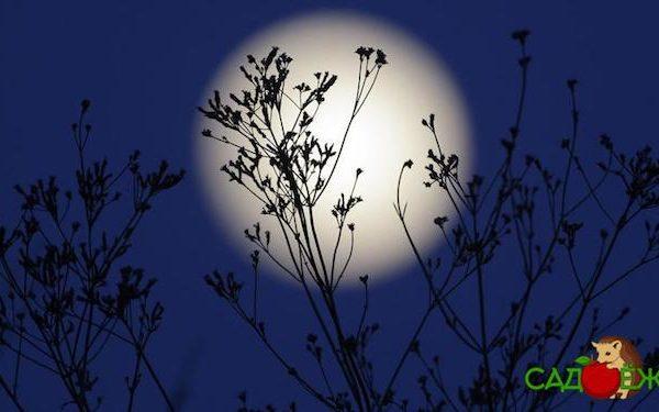 Лунный посевной календарь садовода и огородника на апрель 2020 года