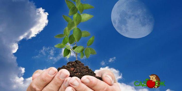 Лунный посевной календарь садовода и огородника на март 2020 года