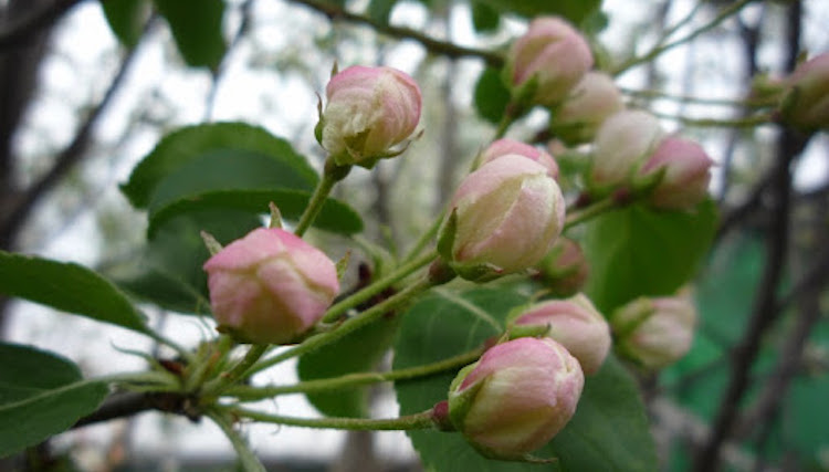 Обработка сада от вредителей и болезней весной