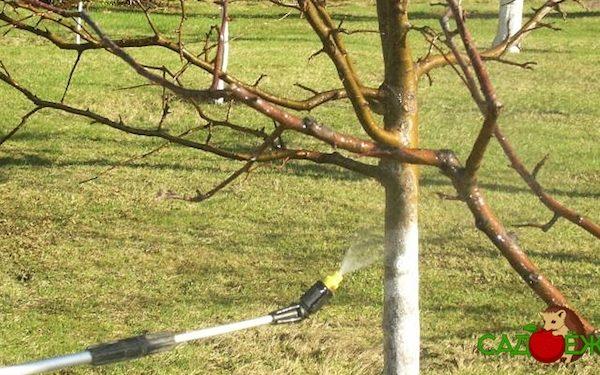 Обработка яблонь от вредителей и болезней весной