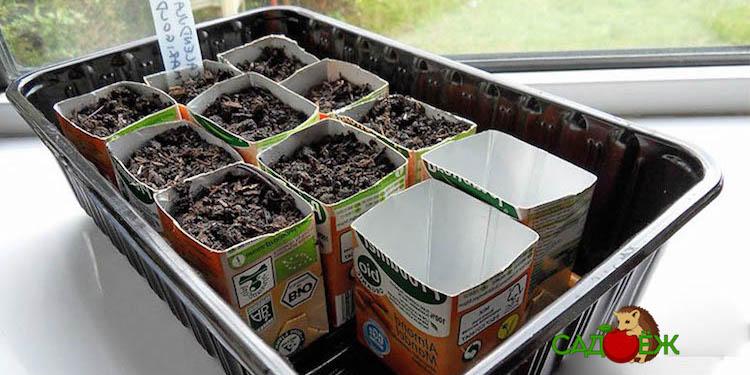Полезное применение коробок Tetra Pak из-под сока и молока в саду и огороде