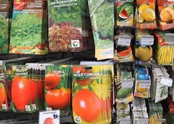 Как правильно выбирать семена и какие купить?
