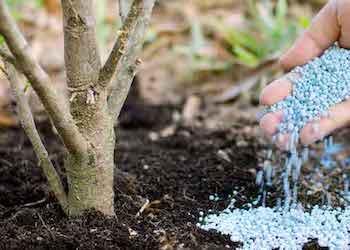 Фосфорные минеральные удобрения для растений в огороде