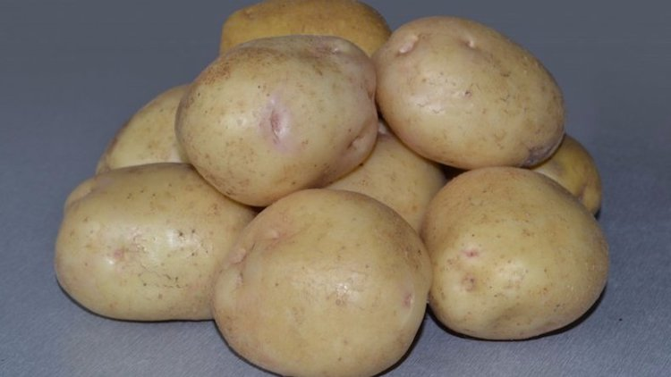 Глазки у картофеля