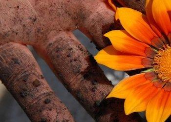 Как просто отмыть руки после огорода
