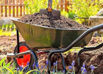 Какой навоз лучше использовать в огороде?
