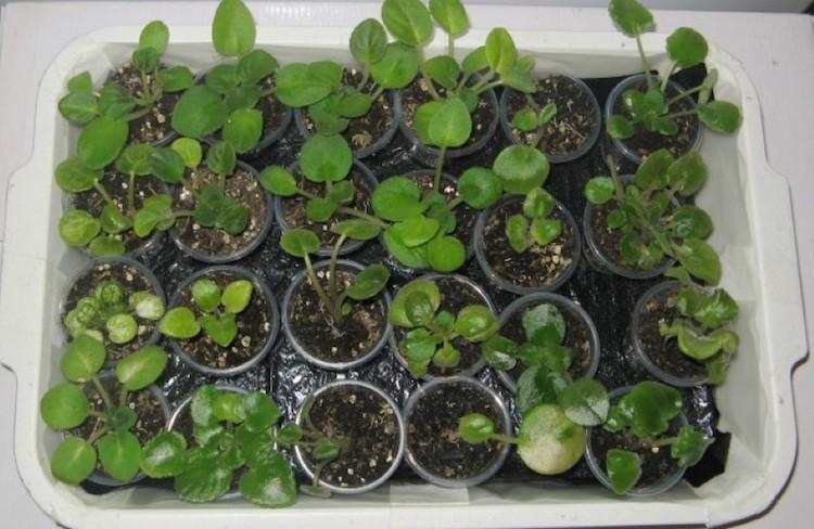 Отзывы о капиллярных матах для растений и рассады