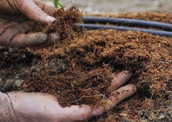Какие растения в огороде нельзя удобрять навозом?
