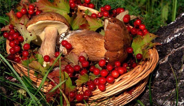 Нужна ли лицензия на сбор грибов и ягод?